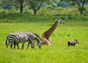 Экскурсия по национальному парку Килиманджаро