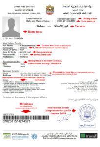 Пример транзитной визы ОАЭ