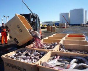 Разгрузка рыбы в исландском порту