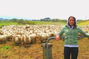 Трудовые будни на овечьей ферме в Новой Зеландии