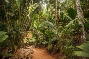 Парк Майская долина на острове Праслин, Сейшельские Острова