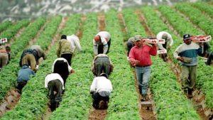 Сезонная работа по сбору урожая в Болгарии