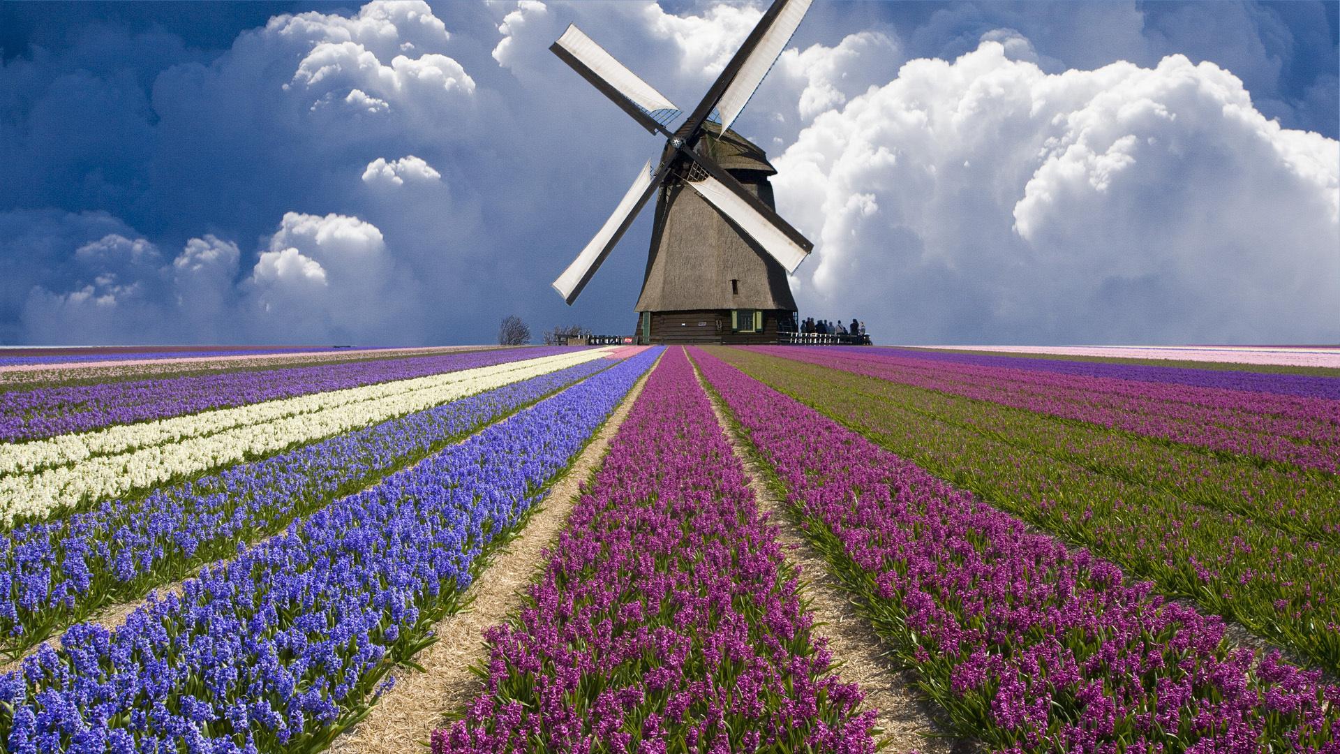 Красивые фото букетов с полевых цветов