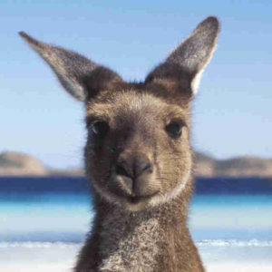 ВНЖ в Австралии