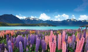 Новозеландская природа