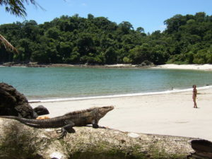 Национальный парк Мануэль Антонио (основан в 1972 г.)