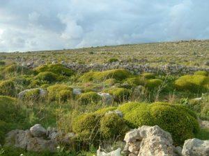 Мальтийская природа