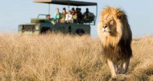 Национальный парк Крюгера – главная достопримечательность Африки. Самый старый и популярный заповедник в мире.