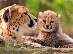 Изначально парк создан не для развлечения туристов, а именно для контроля и защиты от охоты на них, с целью предотвращения исчезновения всех этих прекрасных живых существ.