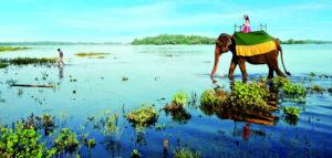 Климат на Шри-Ланке по месяцам. Когда лучше лететь отдыхать?