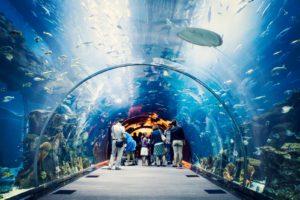 Океанариум Dubai Mall Aquarium